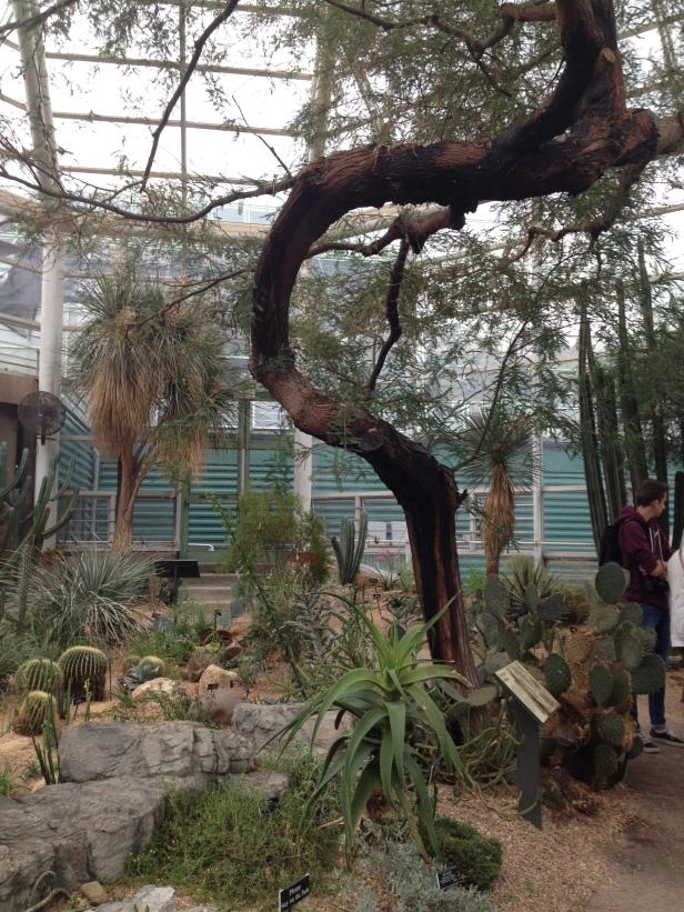 new_york-brooklyn_botanic_climate