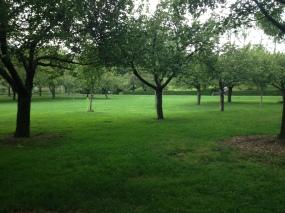 new_york-brooklyn_botanic_garden_trees