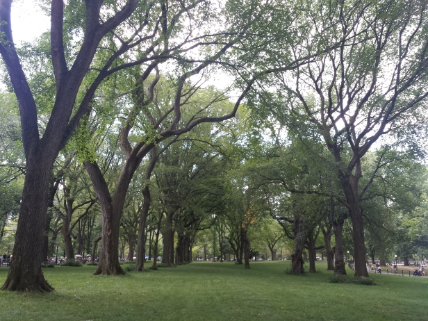 new_york-central_park_trees
