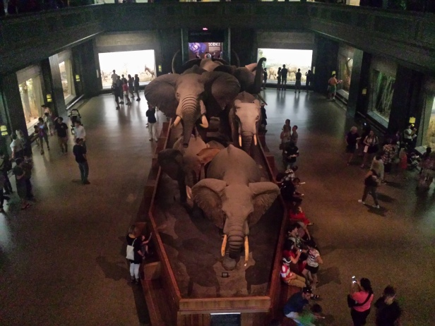 new_york-meseum_of_natural_history_african
