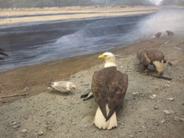 new_york-meseum_of_natural_history_eagle