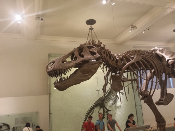 new_york-meseum_of_natural_history_fossil