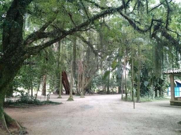 sjc_parque_cidade-arvores_nativas