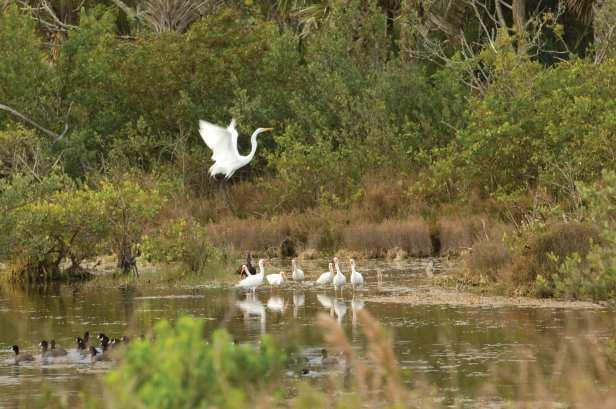 Merritt Island Wildlife Refuge Birdwatching