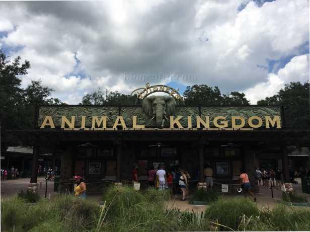 orlando-disney_animal_kingdom
