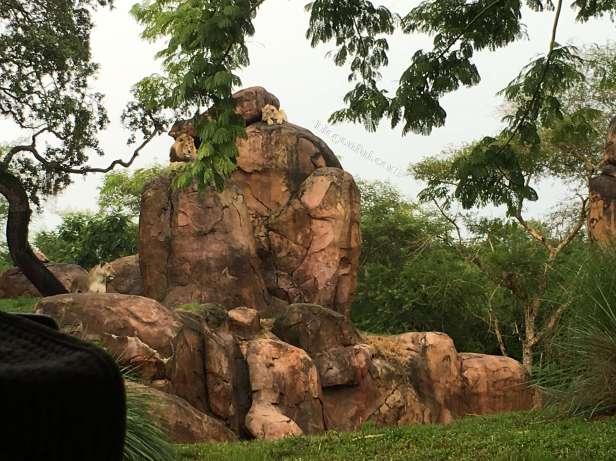 orlando-disney_animal_kingdom_safari